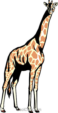 Giraffe Royalty Free Vector Clip Art illustration anim0337
