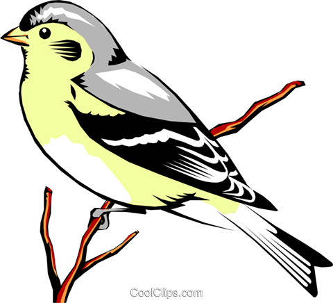 Eastern Goldfinch Royalty Free Vector Clip Art illustration anim0338