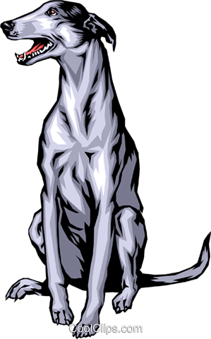 Greyhound Royalty Free Vector Clip Art illustration anim0341