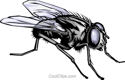 Housefly Royalty Free Vector Clip Art illustration anim0343