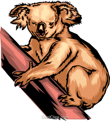 Koala bear Royalty Free Vector Clip Art illustration anim0346