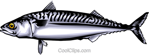 Mackerel Royalty Free Vector Clip Art illustration anim0350