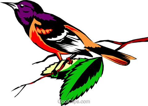 Oriole Royalty Free Vector Clip Art illustration anim0352
