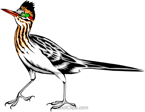 Roadrunner Royalty Free Vector Clip Art illustration anim0362