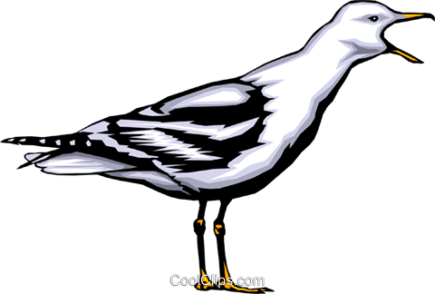 Seagull Royalty Free Vector Clip Art illustration anim0365
