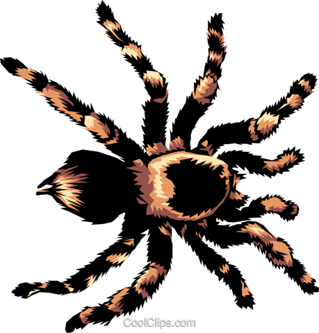 Tarantula Royalty Free Vector Clip Art illustration anim0368