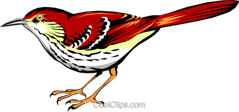 Brown Thrasher Royalty Free Vector Clip Art illustration anim0370