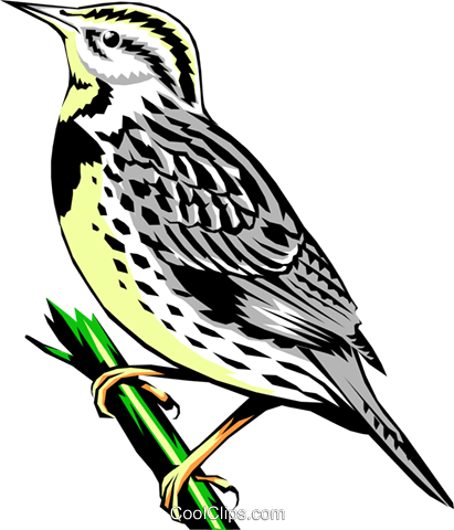 Western Meadowlark Royalty Free Vector Clip Art illustration anim0374