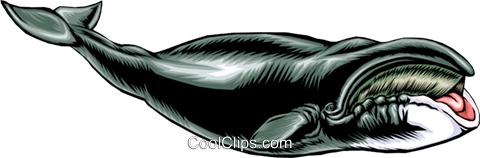 Whale Royalty Free Vector Clip Art illustration anim0375