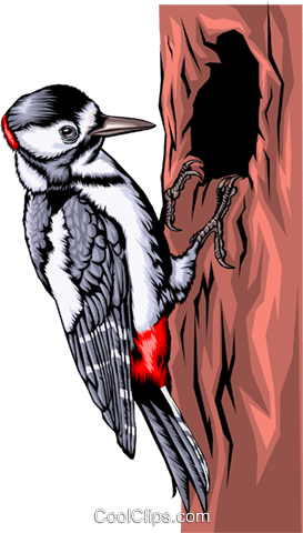 Pileated woodpecker Royalty Free Vector Clip Art illustration anim0378