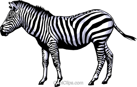 Zebra Royalty Free Vector Clip Art illustration anim0379