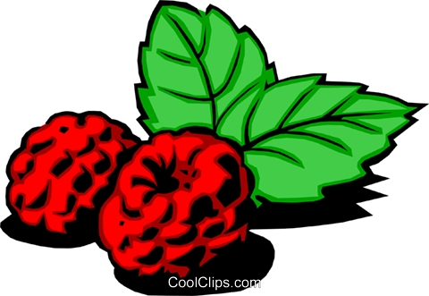 Raspberries Royalty Free Vector Clip Art illustration food0205