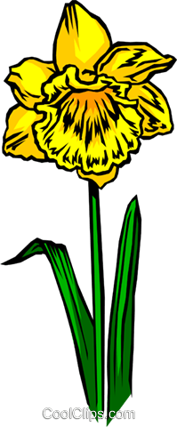 Daffodil Royalty Free Vector Clip Art illustration natu0048
