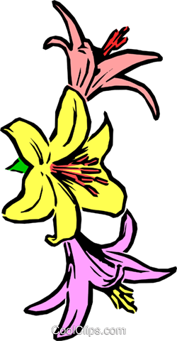 Lilies Royalty Free Vector Clip Art illustration natu0052