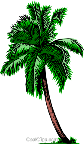 Palm tree Royalty Free Vector Clip Art illustration natu0060
