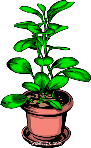 Potted plant Royalty Free Vector Clip Art illustration natu0062