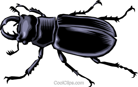 Beetle Royalty Free Vector Clip Art illustration anim0010