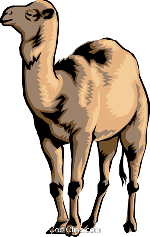Camel Royalty Free Vector Clip Art illustration anim0011