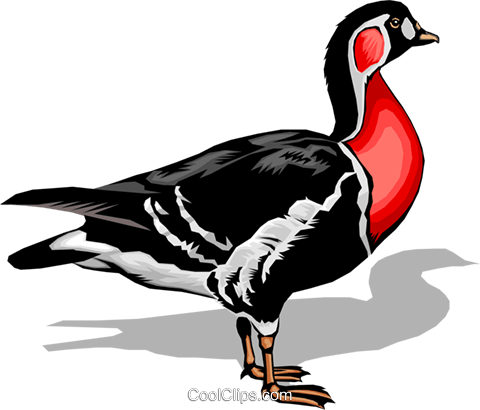 Bird Royalty Free Vector Clip Art illustration anim0015