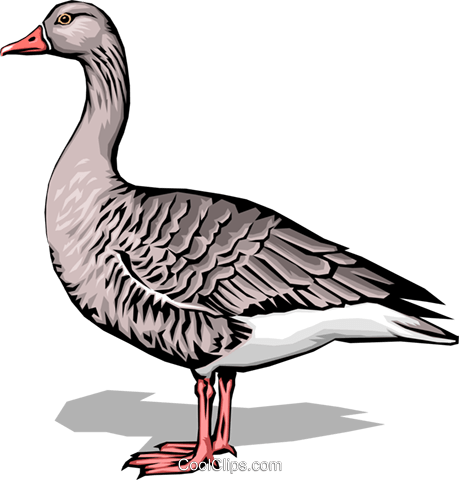 Goose Royalty Free Vector Clip Art illustration anim0016