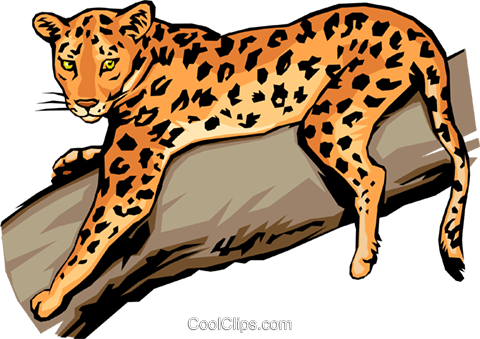 Leopard Royalty Free Vector Clip Art illustration anim0021