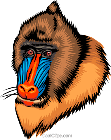 Mandrill Royalty Free Vector Clip Art illustration anim0022