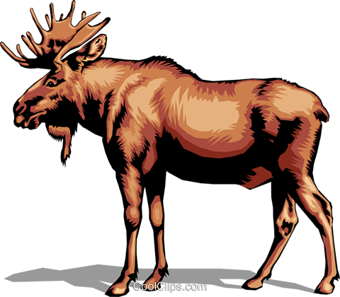 Moose Royalty Free Vector Clip Art illustration anim0023
