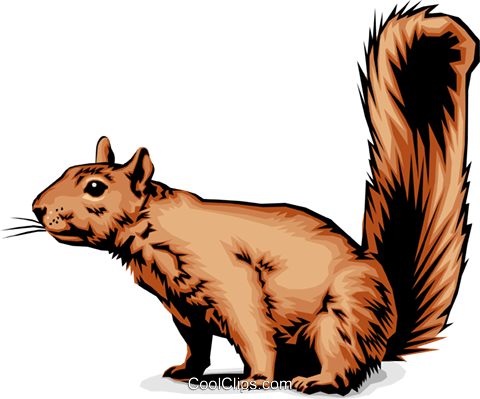 Squirrel Royalty Free Vector Clip Art illustration anim0027