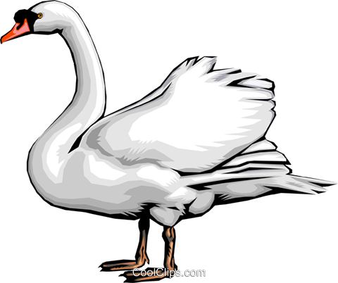 Swan Royalty Free Vector Clip Art illustration anim0029