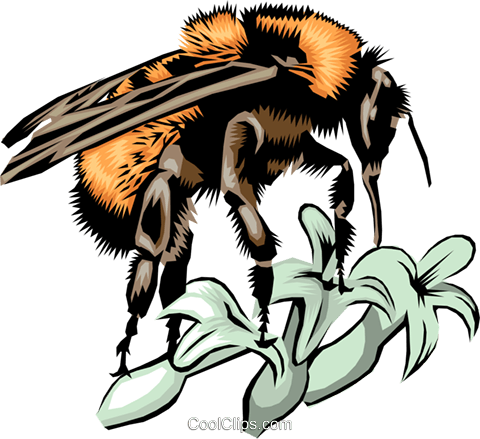 Honeybee Royalty Free Vector Clip Art illustration anim0383