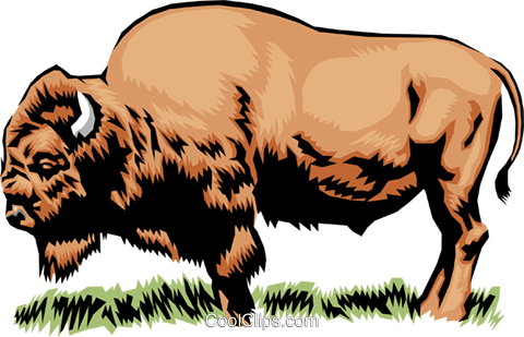 Buffalo Royalty Free Vector Clip Art illustration anim0387