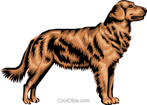 Golden Retriever Royalty Free Vector Clip Art illustration anim0392