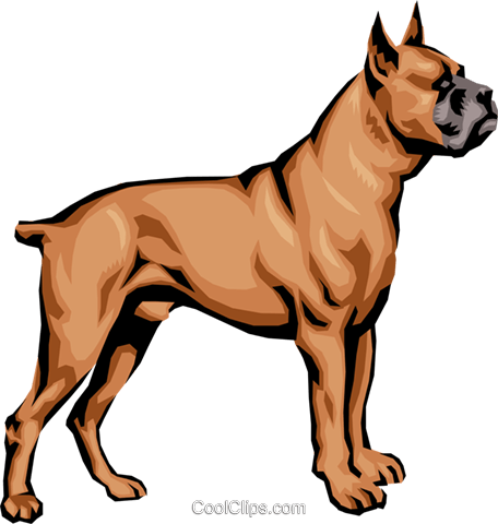 Boxer Royalty Free Vector Clip Art illustration anim0393