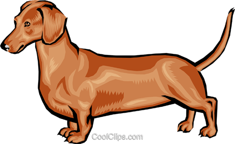 Dachshund Royalty Free Vector Clip Art illustration anim0394