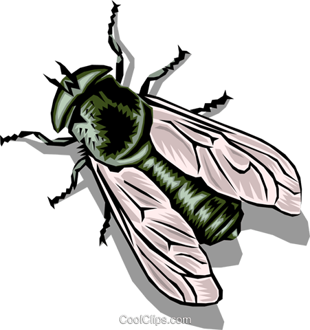 Housefly Royalty Free Vector Clip Art illustration anim0396