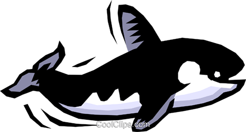 Killer whale Royalty Free Vector Clip Art illustration anim0743