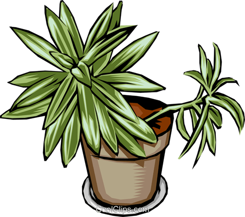 Plant Royalty Free Vector Clip Art illustration natu0001