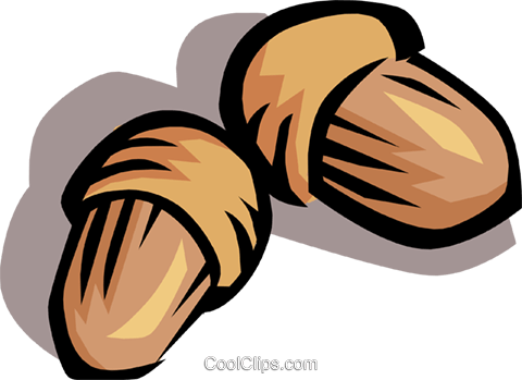 Acorns Royalty Free Vector Clip Art illustration natu0075