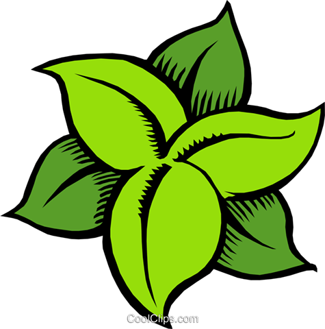 Leaves Royalty Free Vector Clip Art illustration natu0427