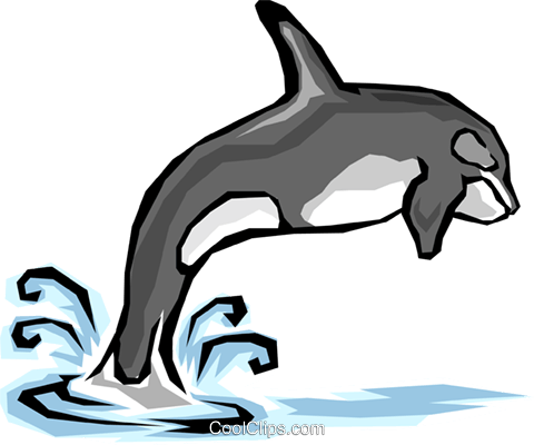 Killer whale Royalty Free Vector Clip Art illustration anim1286