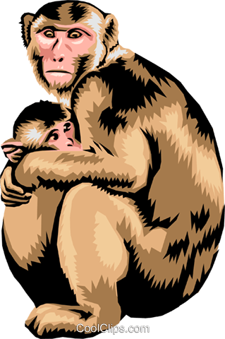 Monkey with baby monkey Royalty Free Vector Clip Art illustration anim1370