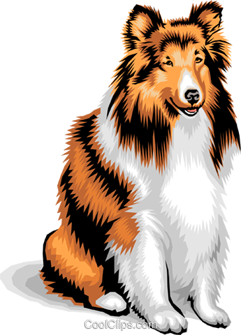 dog/collie Royalty Free Vector Clip Art illustration anim1373