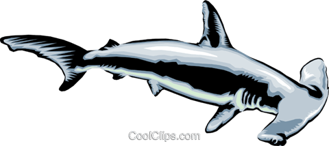 hammerhead shark Royalty Free Vector Clip Art illustration anim1383