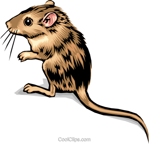 mouse Royalty Free Vector Clip Art illustration anim1388