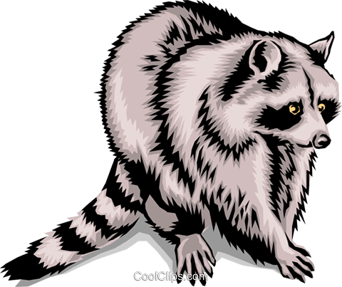 Raccoon Royalty Free Vector Clip Art illustration anim1394