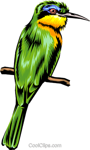 bird Royalty Free Vector Clip Art illustration anim1396