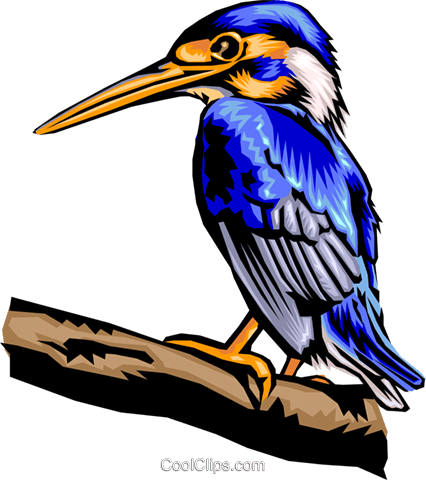 bird Royalty Free Vector Clip Art illustration anim1397