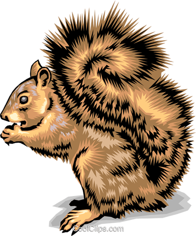Squirrel Royalty Free Vector Clip Art illustration anim1398