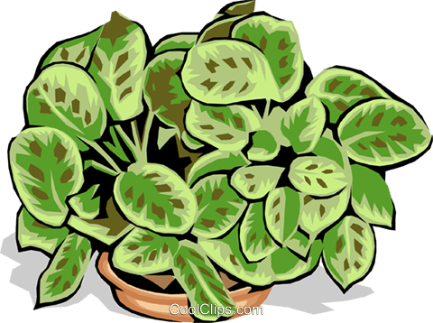 plant Royalty Free Vector Clip Art illustration natu0637