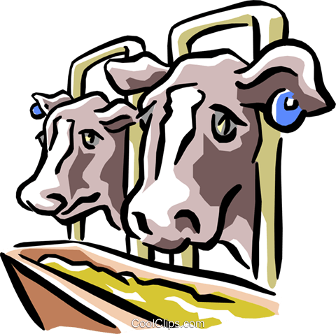 cows at the trough Royalty Free Vector Clip Art illustration anim1522